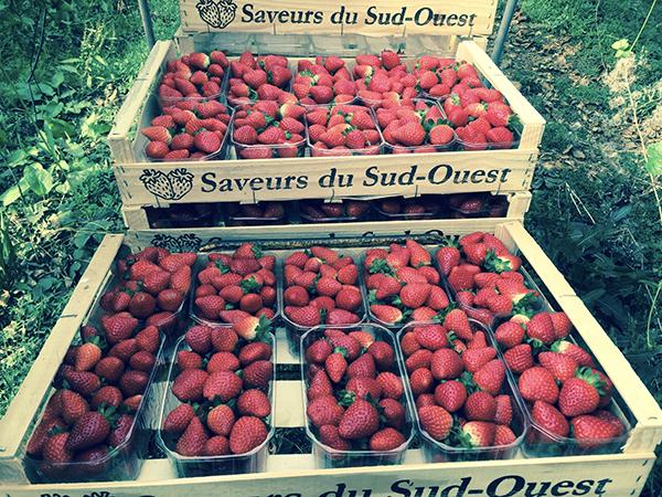 Plateaux de fraises